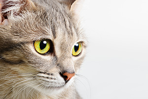cat health fact sheets
