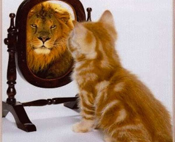 picture-of-cat-looking-in-mirror-and-sees-a-lion-600x490